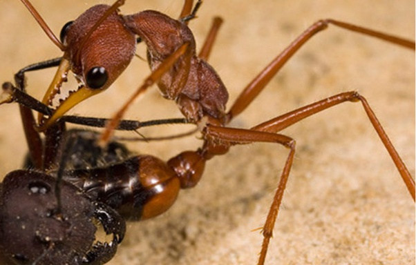 What are the apex predators of the insect world?